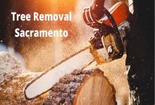 Tree Removal Sacramento (2) (1)